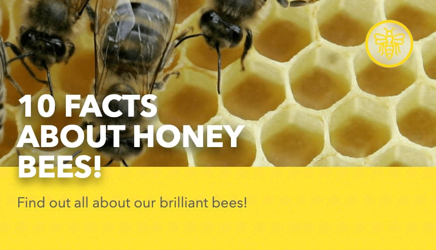 10 Facts About Honey Bees!