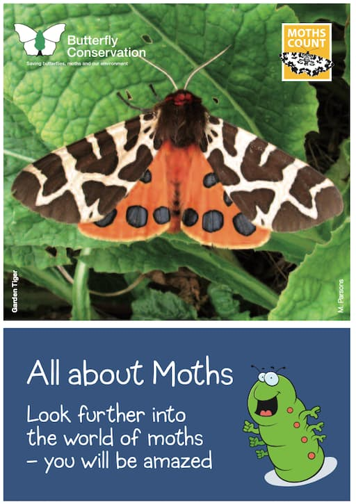 All About Moths (PDF)
