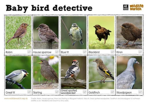 Baby Bird Detective Worksheet (PDF)
