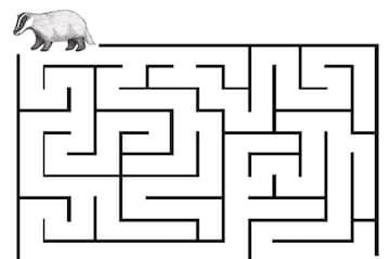 Badger Maze