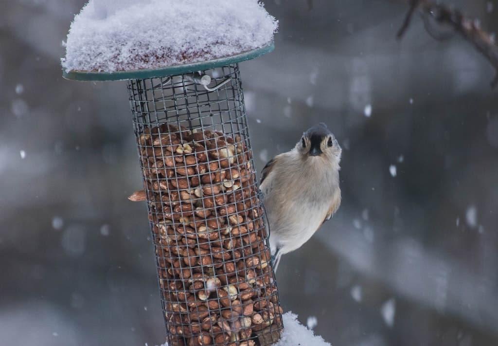 Make Your Own Bird Feeder (RSPB)