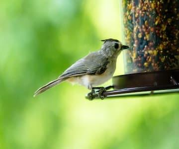 Make Your Own Bird Feeder (BBC)