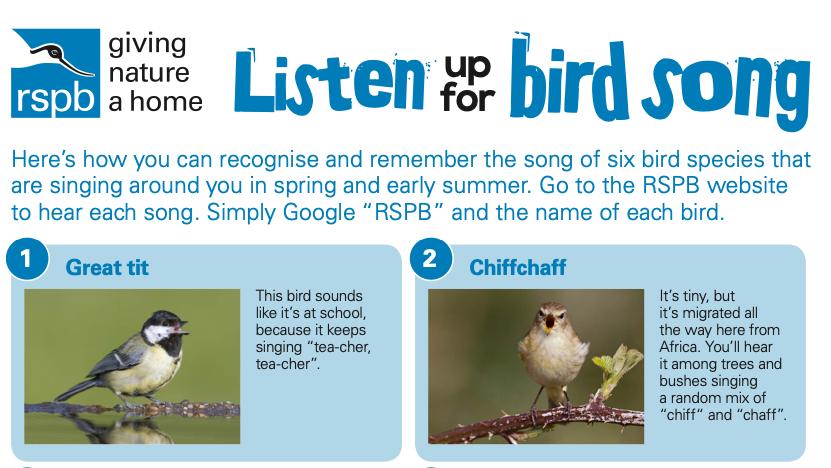 Bird Songs (PDF)