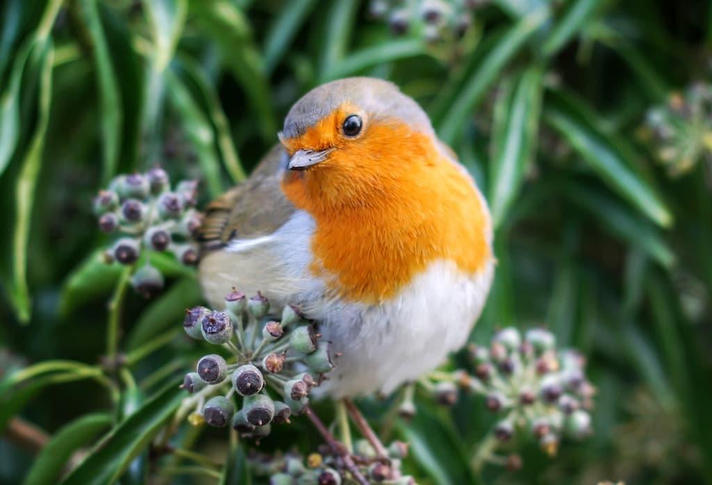 Birds - List of Live Webcams