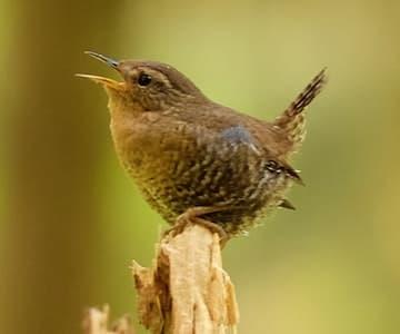 Bailies of Bennachie - Birds