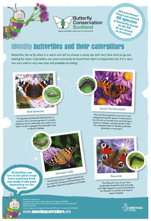 Munching Caterpillars