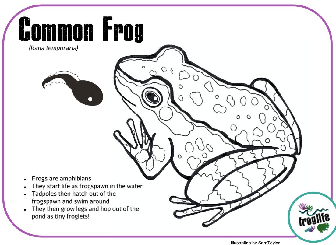 Colour in Amphibians - Frog