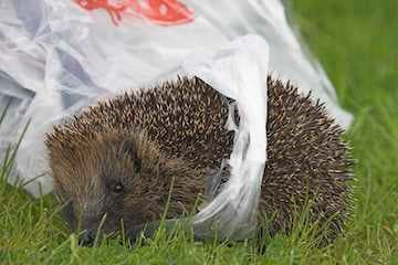 How Can Litter be Dangerous to Wildlife?