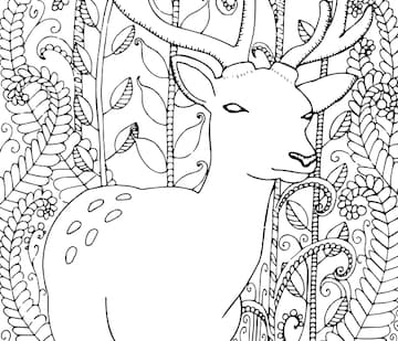Deer - Colouring In