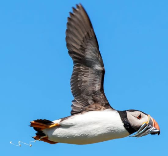 Do Birds Pee? Plus 16 More Bird Poop Facts