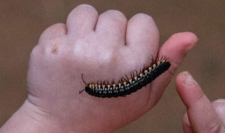 Minibeasts and Creepy Crawlies Week