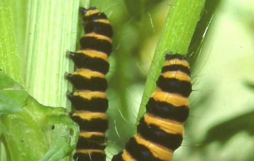 Moths - Warning - I Taste Horrid!