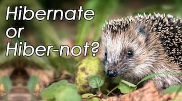 Hibernate or Hibernot?