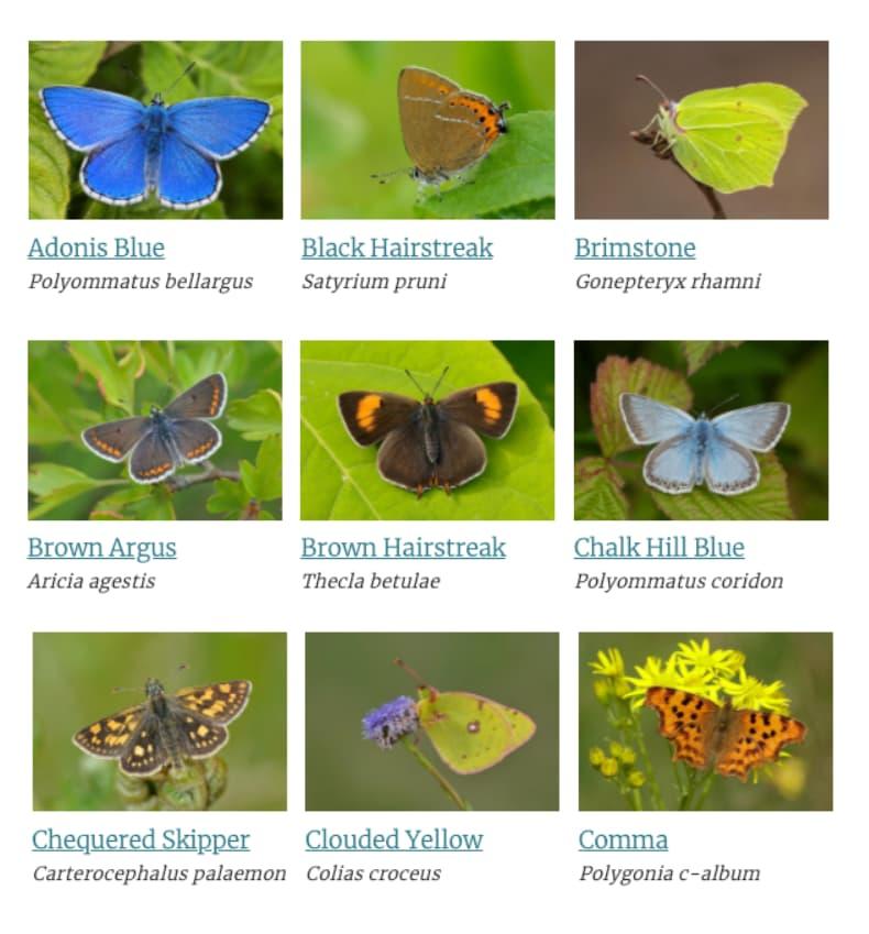 Identify a Butterfly