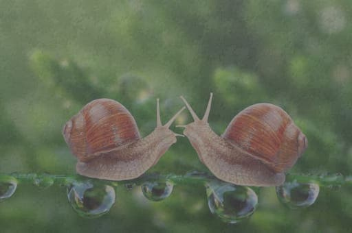 Snails Jigsaw