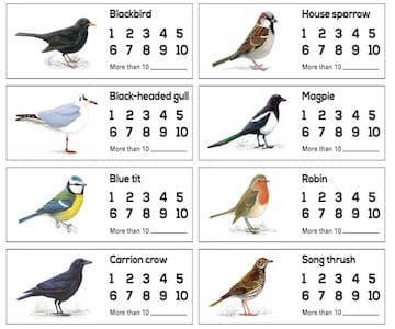Some of Jock's Favourite Birds