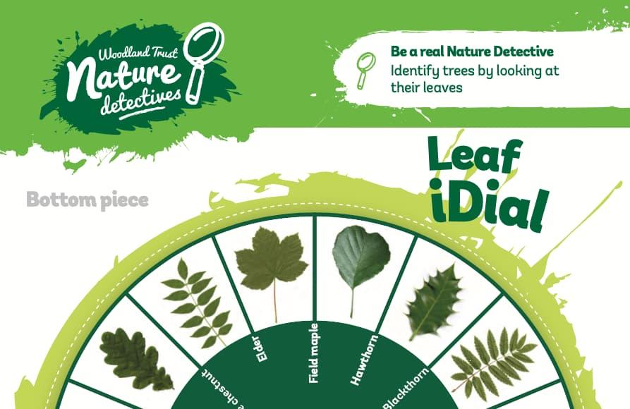Leaf Spotter Dial
