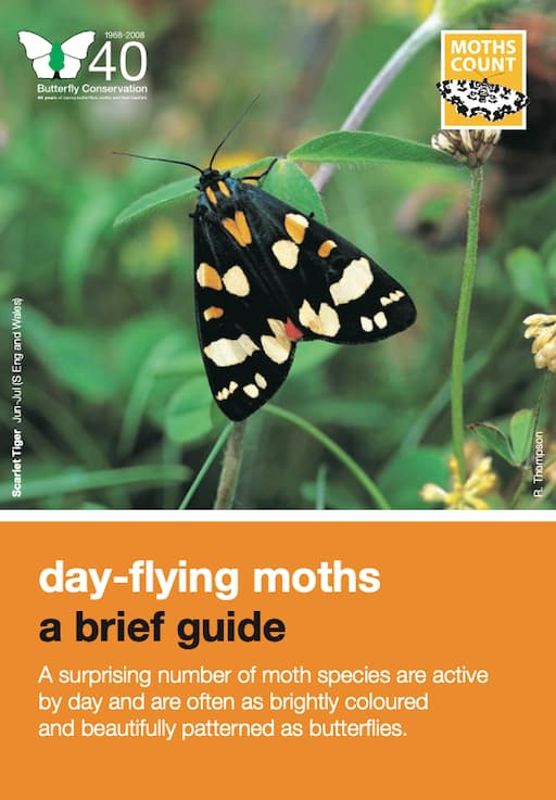 A Day-Flying Moths - A Brief Guide  (PDF)