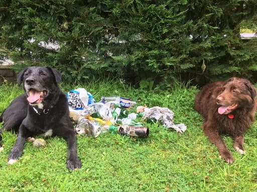 Pets with Litter Collected on Bennachie