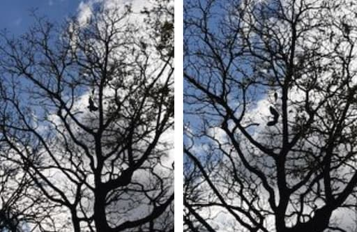 Litter in Trees