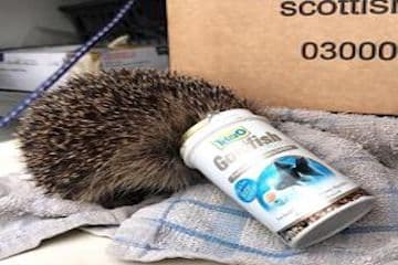 Real Life Stories from the Scottish SPCA