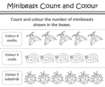 Minibeast Count and Colour