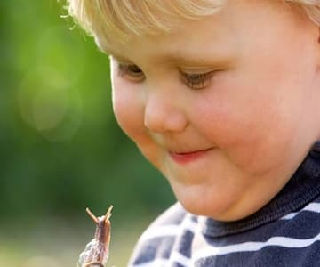 What Is A Minibeast? (Woodland Trust)