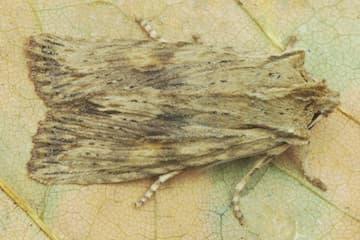 Moths Are Struggling!
