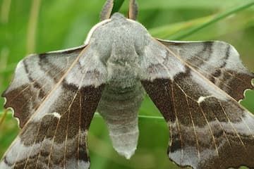 Moths and Butterfly Body Parts