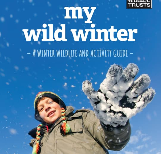 My Wild Winter - Activity Guide