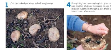 How To Make A Potato Trap