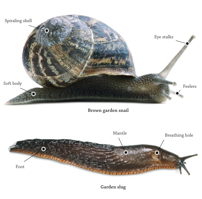 Slugs and Snails (DK FindOut!)