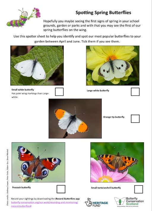 Spotting Spring Butterflies