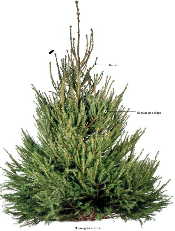 Evergreen Tree Parts