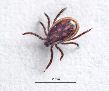 A Word About Ticks