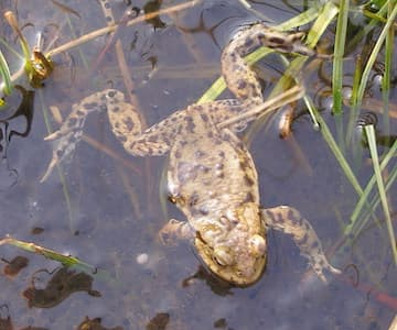 Amphibians In Spring
