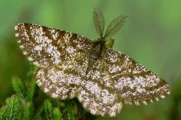 What Makes A Moth a Moth?