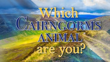 Which Cairngorms Animal Are You?