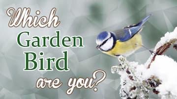 Which Garden Bird Are You?