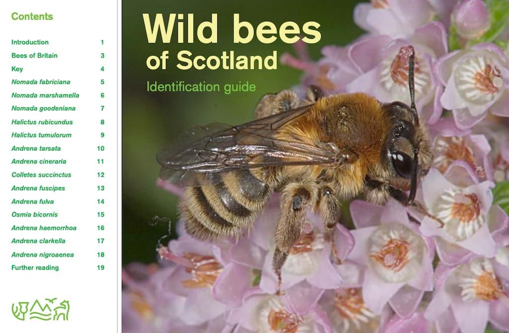 Wild Bees of Scotland
