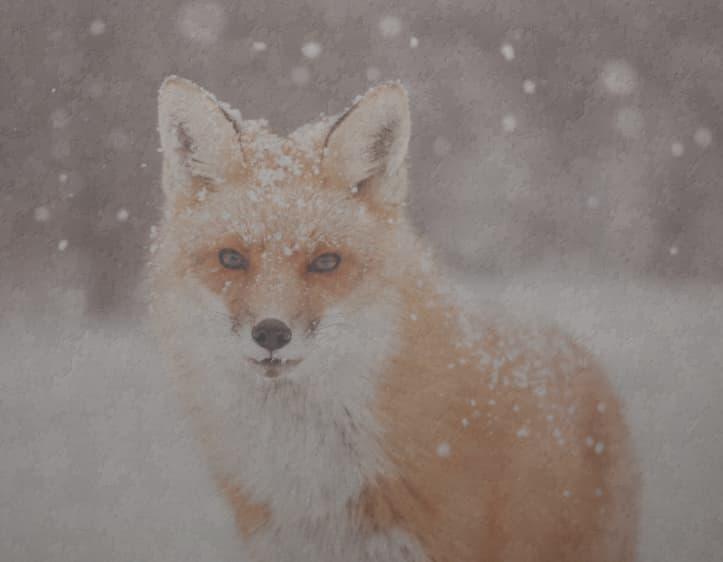 Winter Fox - Jigsaw