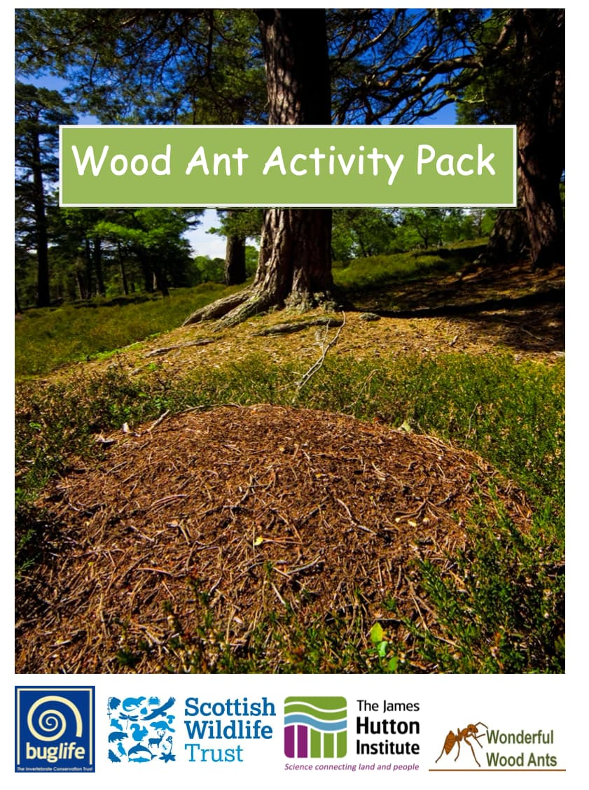 Wood Ant Activity Pack